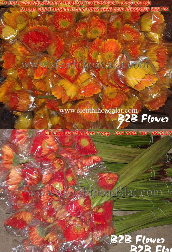 hoa da lat, dalat hoa, hoa cam tu cau